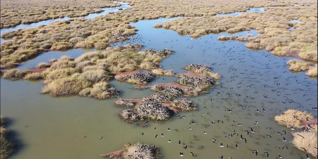Waterbirds require wetlands to be flooded, not just river channels.
