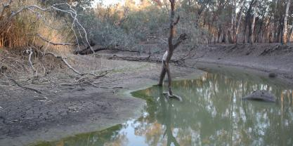 Drying Macquarie River which supplies the Macquarie Marshes, location for upstream re-regulating storage